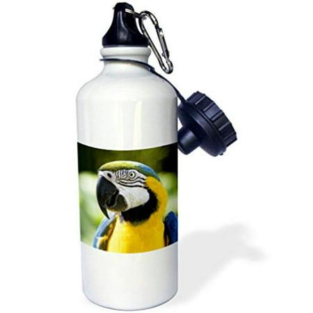 3dRose Parrot, Sports Water Bottle, 21oz (Parrot Water Bottles)