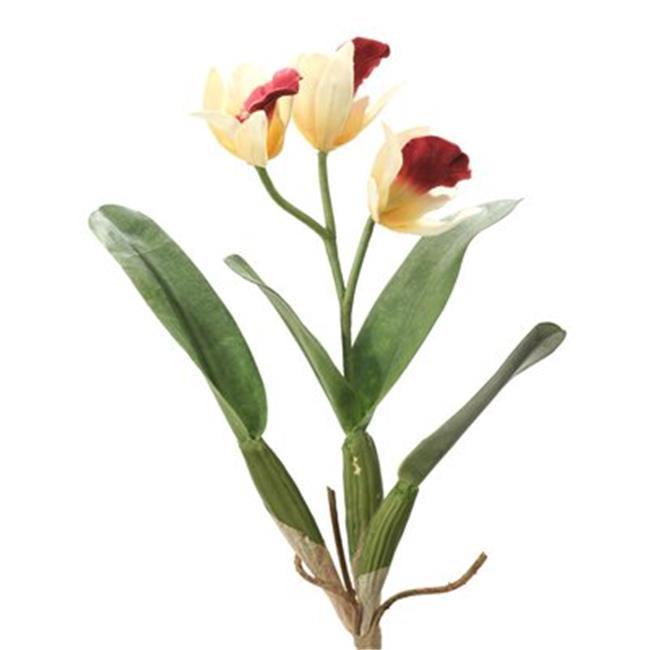 Distinctive Designs DW-1087-CRBG DIY Flower Cream-Burgundy Cattleya Orchid Plant - Pack of 6