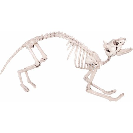 Cat Skeleton Halloween Decoration