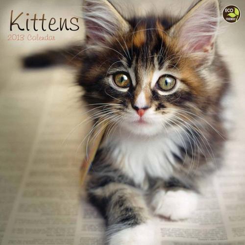 Mead Kittens Wall Calendar
