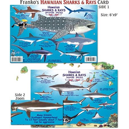 Hawaiian Shark and Ray Fish ID for Scuba Divers and Snorkelers, Laminated to protect against water Very detailed Images By Franko Maps