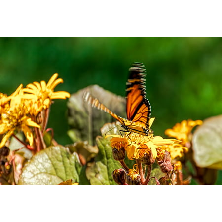 LAMINATED POSTER Nature Garden Spring Blossom Butterfly Flower Poster Print 24 x 36