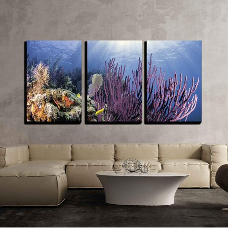 American Modern Coral (wall26 - 3 Piece Canvas Wall Art - Coral Reefs of North America - Modern Home Decor Stretched and Framed Ready to Hang - 16
