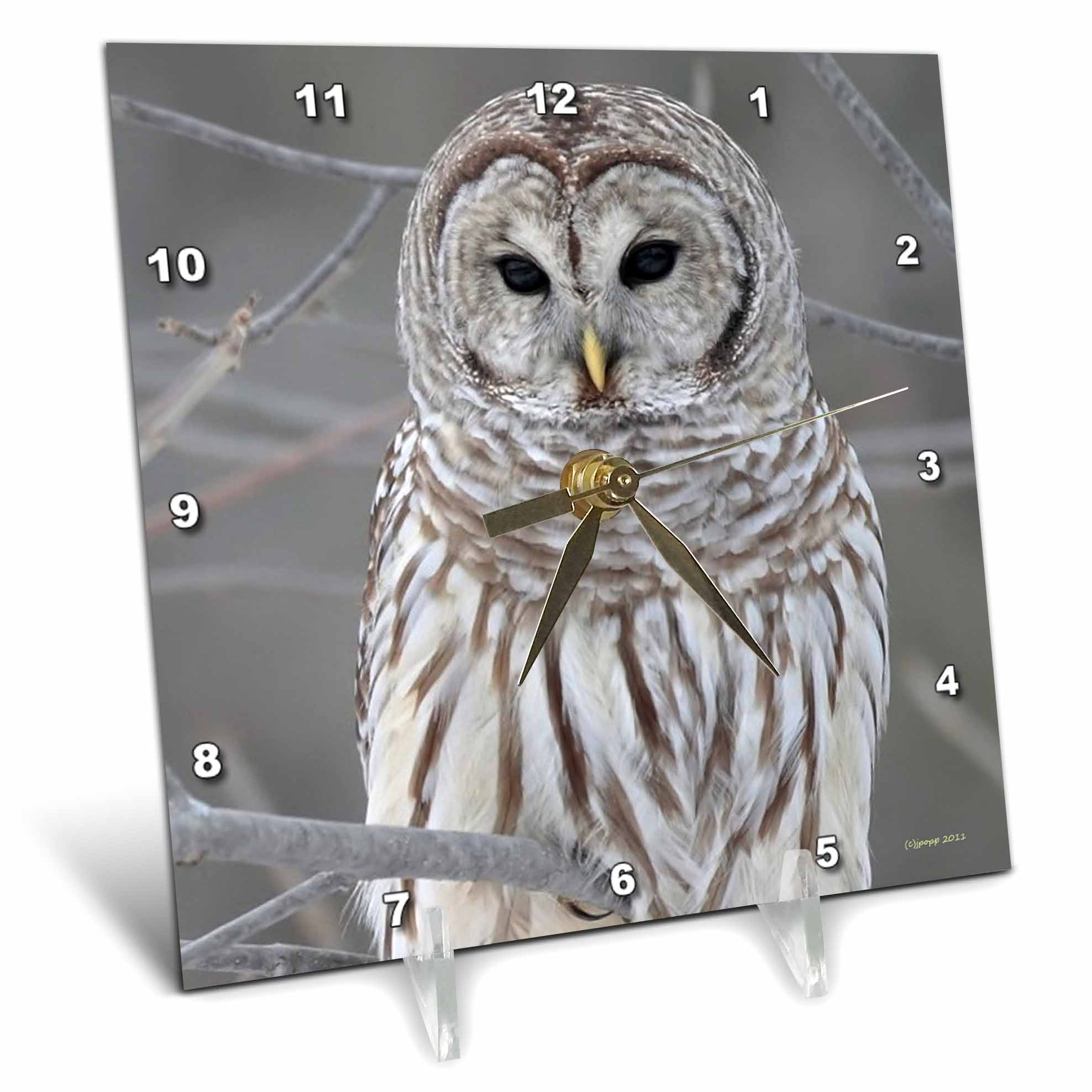 3dRose Barred Owl, Desk Clock, 6 by 6-inch