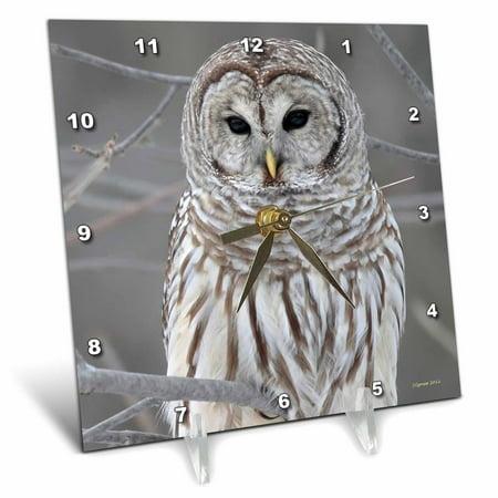 3dRose Barred Owl, Desk Clock, 6 by 6-inch
