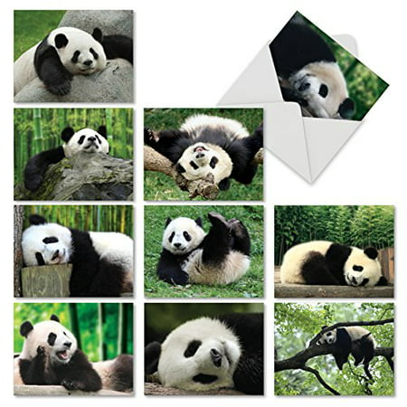 'M6471OCB POOPED PANDAS' 10 Assorted All Occasions Notecards Featuring Passed Out Pandas Sweetly Sleeping After a Long Hard Day of Playful Antics with Envelopes by The Best Card