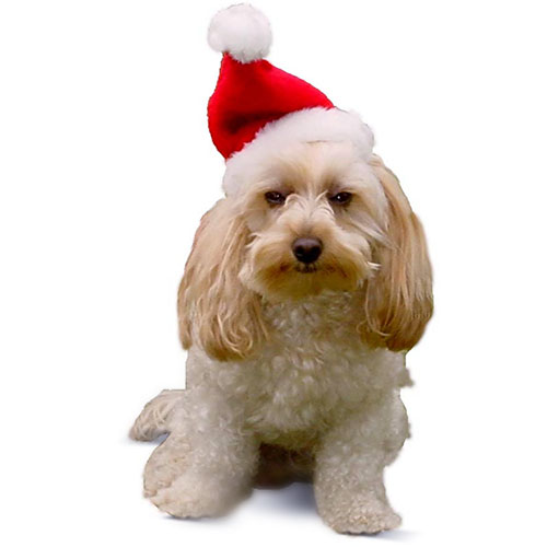 Holiday Pet Santa Hat