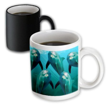 3dRose Curious Dolphins, Magic Transforming Mug, 11oz