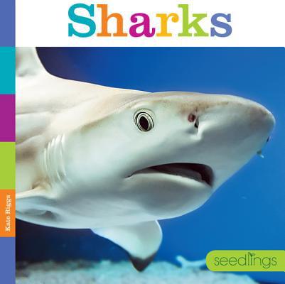 Seedlings: Sharks