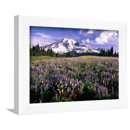 Wildflowers in Mt. Rainier National Park Framed Print Wall Art By Stuart