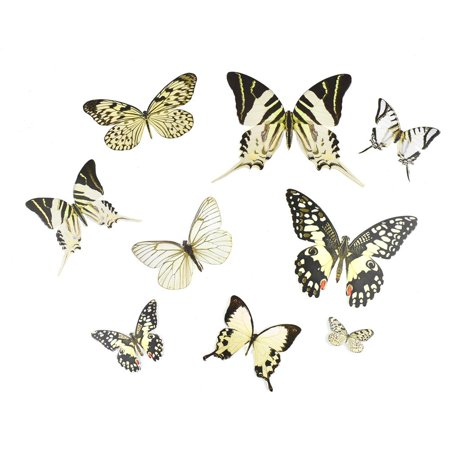 Butterfly Paper Craft Die Cuts, White, - Butterfly Die Cut