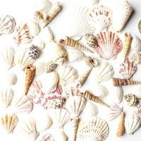 Mixed Beach Seashells - Bag of Approx. 50 Seashells
