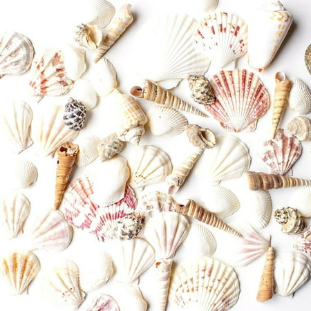 Mixed Beach Seashells - Bag of Approx. 50 Seashells Beach Inspired Sea Shell
