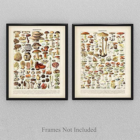 Vintage French Mushrooms - Set of Two - 11x14 Unframed Art Print - Perfect Vintage Home Kitchen Decor/Farm Decor ()