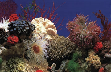 Penn-Plax Double Back Roll-A-Scene DB5 Amazon Waters II Coral Reef Aquarium Background, 15 m Length x 19 Inch... by Penn Plax