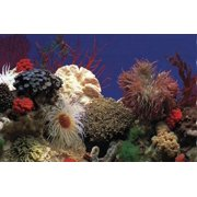 Penn-Plax Double Back Roll-A-Scene DB5 Amazon Waters II/Coral Reef Aquarium Background, 15 m Length x 19 Inch Width
