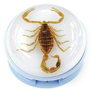 Golden Scorpion Blue Stapler