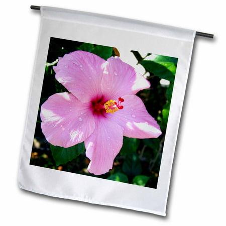 3dRose Pink Dew Hibiscus - Garden Flag, 12 by 18-inch