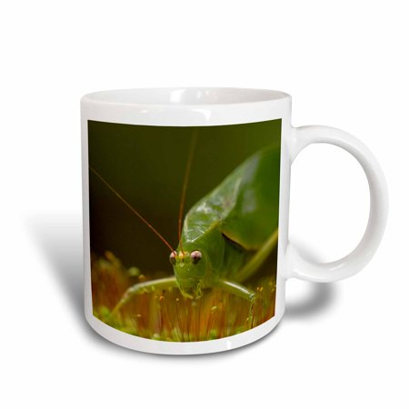 3dRose Katydid, orthopteran, in cloud forest, Costa Rica, Ceramic Mug, 11-ounce