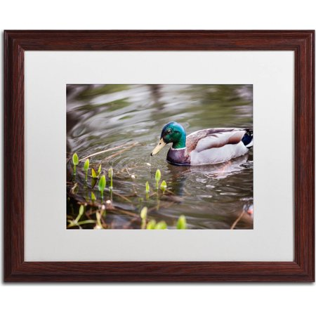 "Trademark Fine Art ""Mallard"" Canvas Art by Jason Shaffer, White Matte, Wood Frame"