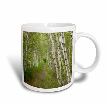 3dRose Paper birch trees, Path, Acadia NP, Maine - US20 JMO0986 - Jerry and Marcy Monkman, Ceramic Mug, 15-ounce