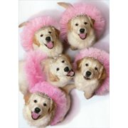 Avanti Press Golden Puppies In Tiaras And Tutus Stand Out Pop Up Funny Birthday Card