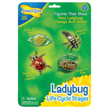 Insect Lure - Life Cycle Stages -Ladybug