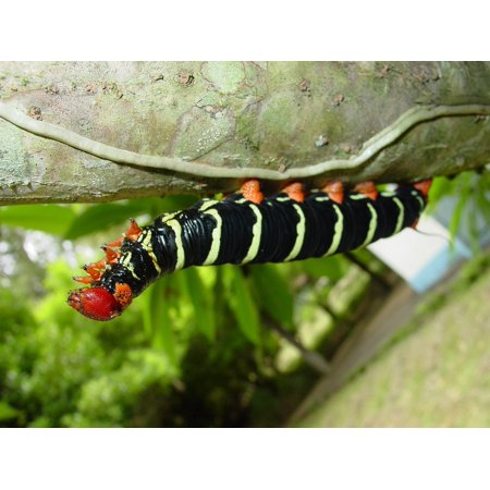Canvas Print Worm Colorful Insect Caterpillar Butterfly Plant Stretched Canvas 10 x 14