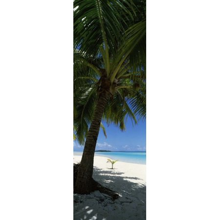 Palm tree on the beach Aitutaki Cook Islands Poster Print