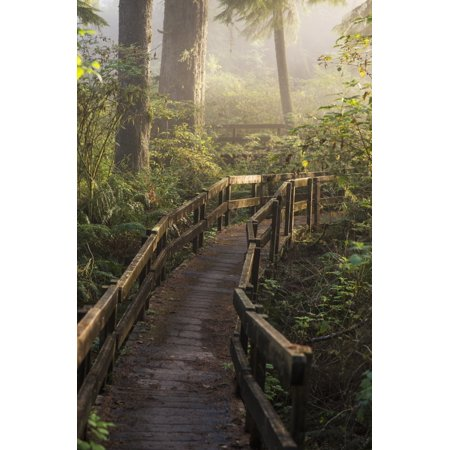 Fog softens the sunlight in the forest trail to the Cathedral Tree Astoria Oregon United States of America