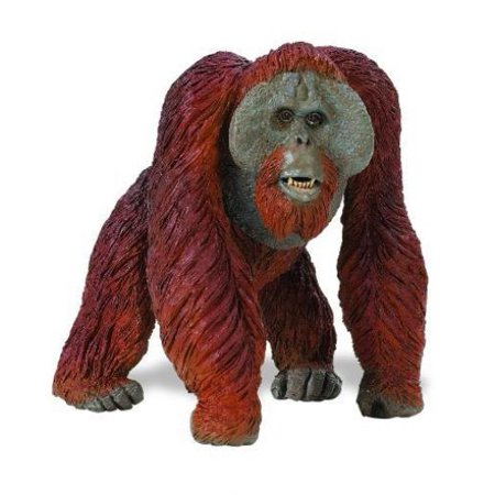 Safari Ltd Wildlife Wonders Bornean Orangutan