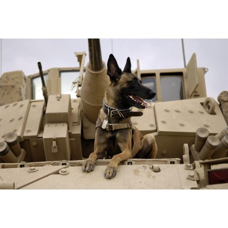 Us Army Air Force - February 13 2007 - US Air Force military working dog sits on a US Army M2A3 Bradley Fighting Vehicle before heading out on a mission in Kahn Bani Sahd Iraq Poster Print