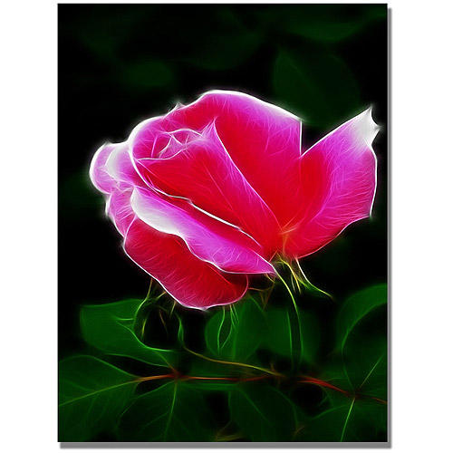 "Trademark Art ""Pink Rose Abstract"" Canvas Wall Art by Kathie McCurdy"