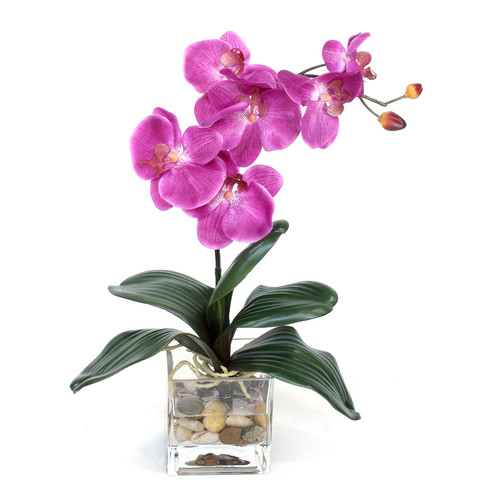 Dalmarko Designs Fuchsia Orchid in Glass Vase