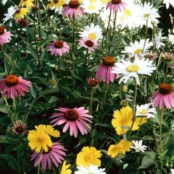 The Dirty Gardener Partial Shade Wildflower Seed Mix - .5 (Best Flowers For Partial Shade)