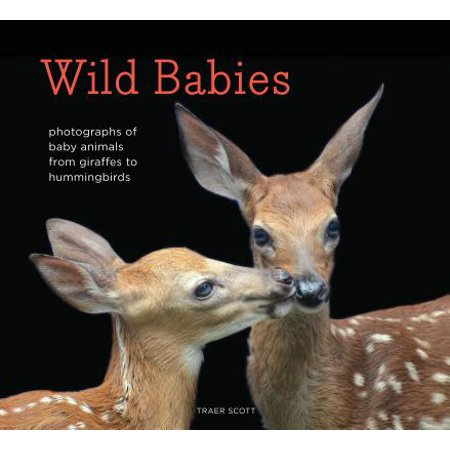 Hummingbirds Animals - Wild Babies : Photographs of Baby Animals from Giraffes to Hummingbirds