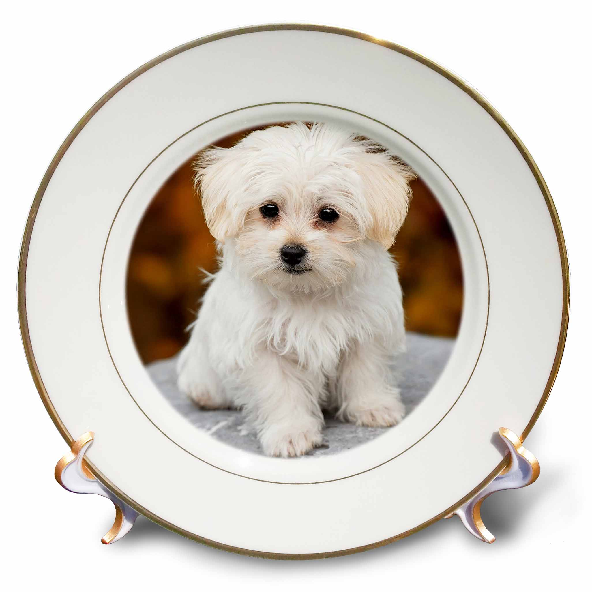 3dRose Maltese. Cute little puppy. Porcelain Plate, 8-inch by 3dRose