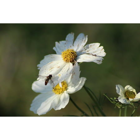 Canvas Print Flowers Insects Honey Bee Garden Fleure Bee Macro Stretched Canvas 10 x