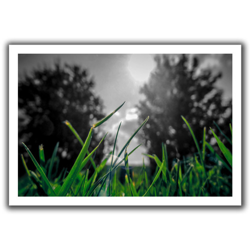 ArtWall 'Grass' by John Black Photographic Print on Canvas