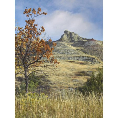 Fall Foliage in South Unit, Theodore Roosevelt National Park, North Dakota Print Wall Art By Tim Fitzharris