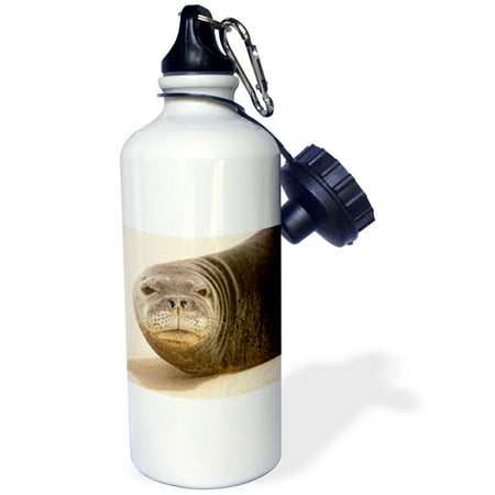 3dRose Hawaiian Mork Seal on the beach - closeup - only about 1500 left in the world.Kauai, Hawaii, Sports Water Bottle, (1500 Water)