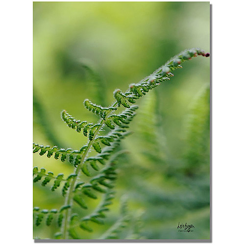 "Trademark Fine Art ""Fern"" Canvas Wall Art by Lois Bryan"