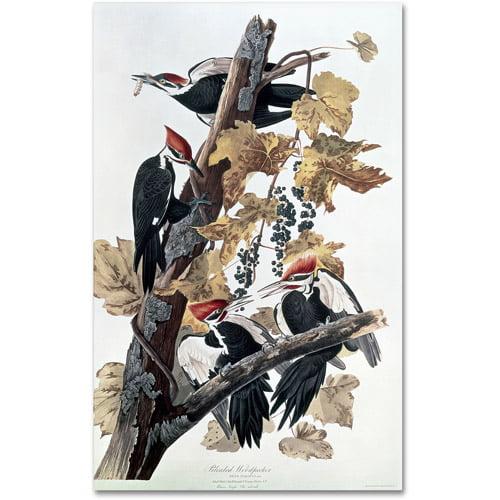 "Trademark Fine Art ""Pileated Woodpeckers"" Canvas Art by John James Audubon"