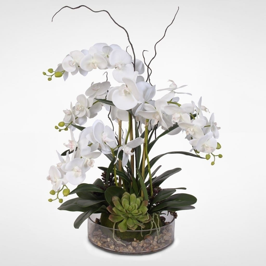 White Phalaenopsis Orchid with Succulents and Rocks in a Glass Pot