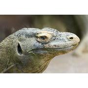 LAMINATED POSTER Zoo Reptiles Komodo Dragon Poster Print 24 x 36