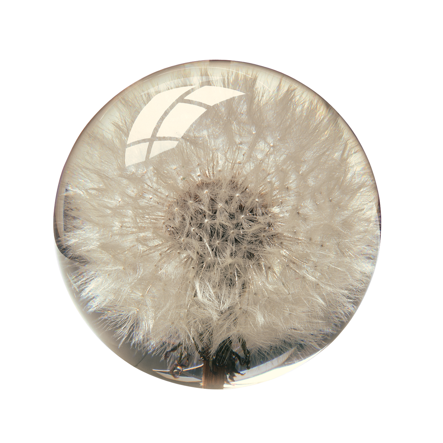 Dandelion Paperweight - Crystal Clear Resin with Dandilion Puff Inside - 2 3/8""
