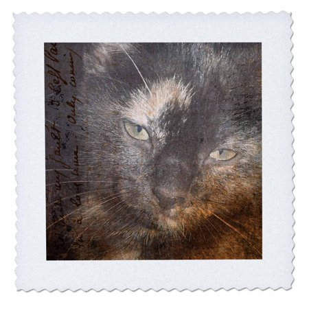 3dRose Kitten Grunge - Quilt Square, 6 by 6-inch