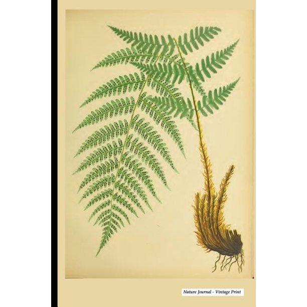 Vintage Print : Vintage Nature Print (24