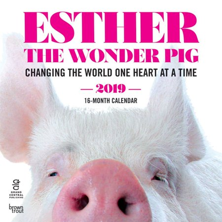 2019 Esther the Wonder Pig 2019 Wall Calendar, by BrownTrout