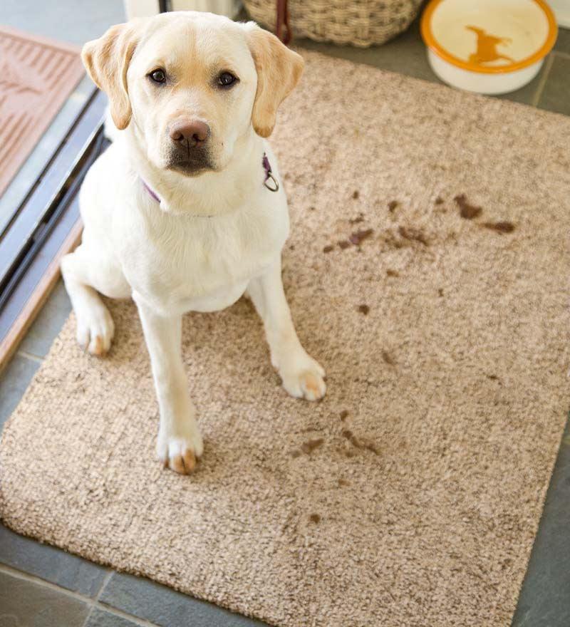 "Large Microfiber Mud Rug - Doormat, 29"" X 39"""